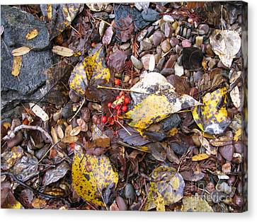 Rocks And Berries Canvas Print by Leone Lund