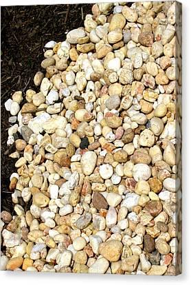Rocks And Mulch Canvas Print by Deborah  Crew-Johnson