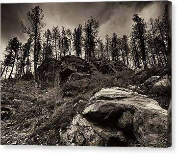 Canvas Print featuring the photograph Rocks And Trees And Trees And Rocks by Trever Miller