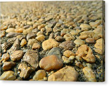 Rocks On My Path Canvas Print by Andrea Anderegg