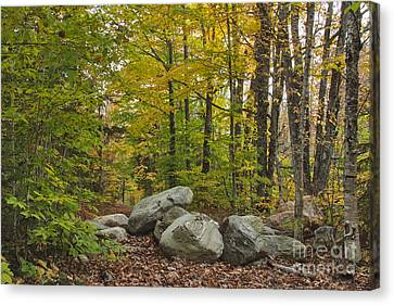 Rocky Forest Path Canvas Print