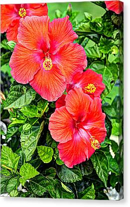 Rocky Hill Hibiscus Canvas Print by Craig T Burgwardt
