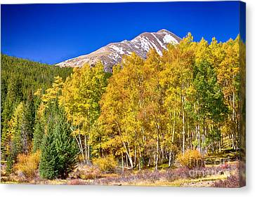 Rocky Mountain Autumn Bonanza Canvas Print by James BO  Insogna