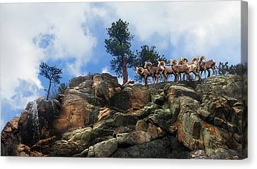 Rocky Mountain Big Horn Herd Canvas Print by Ric Soulen