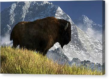 Rocky Mountain Buffalo Canvas Print by Daniel Eskridge