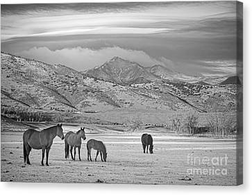 Rocky Mountain Country Morning Bw Canvas Print by James BO  Insogna