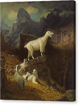 Rocky Mountain Goats Canvas Print by Albert Bierstadt