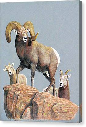 Rocky Mountain Ram Ewe And Lamb Canvas Print