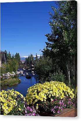 Rocky Mountain Summer Life Canvas Print