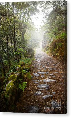 Raining Canvas Print - Rocky Trail In The Foggy Forest by Carlos Caetano