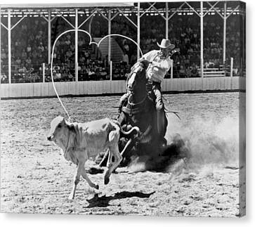 Rodeo Calf Roping Canvas Print by Underwood Archives