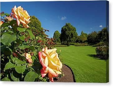 Rogers Rose Garden, Hamilton Gardens Canvas Print by David Wall