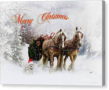Draft Horse Canvas Print - Merry Christmas by Shanina Conway