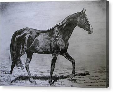 Roko Canvas Print by Melita Safran