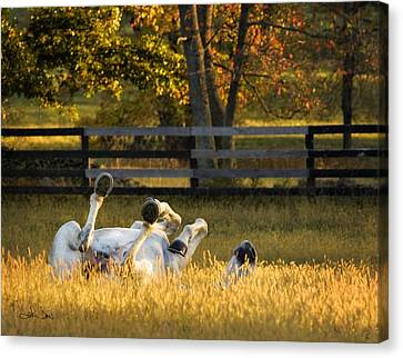 Roll In The Hay Canvas Print