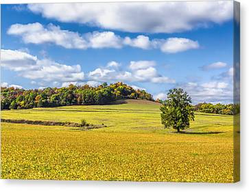 Rolling Fields Of Color Canvas Print by Bill Tiepelman