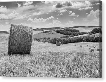 Rolling Fields Canvas Print by Tony Murray