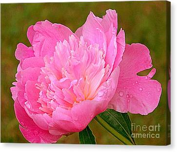 Pink Peony Canvas Print by Eunice Miller