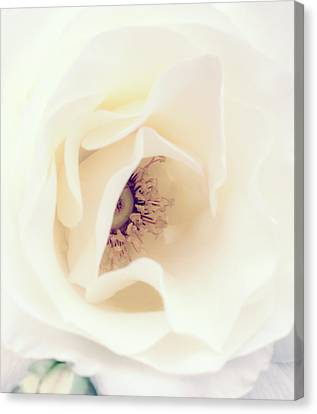Romance In A Rose Canvas Print