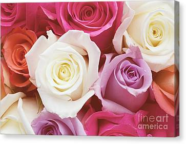 Romantic Rose Garden Canvas Print by Kim Fearheiley