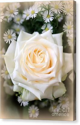 Romantic White Rose Canvas Print by Carol Groenen