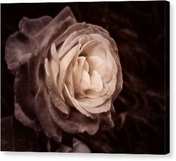 Romantica Canvas Print by Mary Zeman