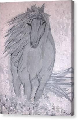 Romeo The White Stallion Canvas Print