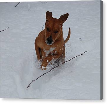 Romp In The Snow Canvas Print by Mim White