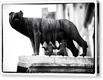Wolf Pics Canvas Print - Romulus And Remus by John Rizzuto