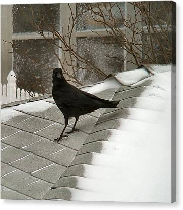 Roof Crow Canvas Print
