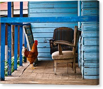 Rooster On Porch  Canvas Print by Robert Watcher
