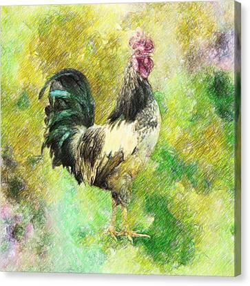 Rooster Canvas Print by Taylan Apukovska