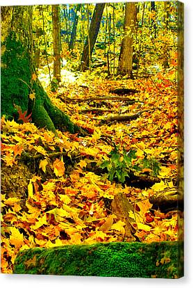 Canvas Print featuring the photograph Root Steps by Zafer Gurel