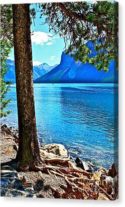 Canvas Print featuring the photograph Rooted In Lake Minnewanka by Linda Bianic