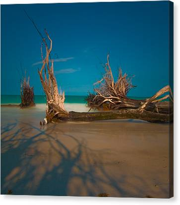 Roots 1 Canvas Print by Rolf Bertram