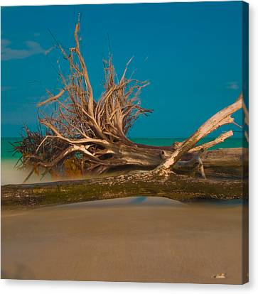 Roots 2 Canvas Print by Rolf Bertram