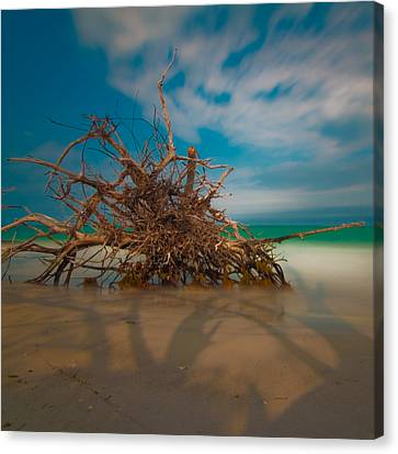 Roots 3 Canvas Print by Rolf Bertram