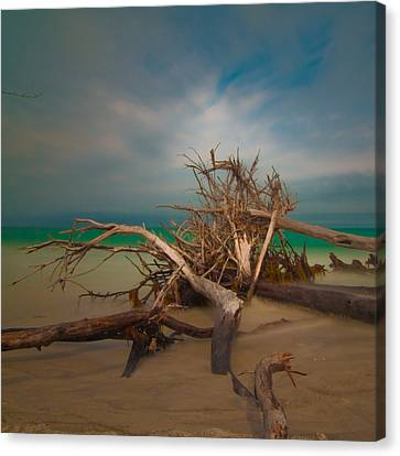 Roots 4 Canvas Print by Rolf Bertram