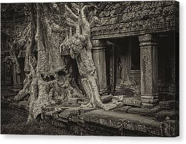 Roots In Ruins 7, Ta Prohm, 2014 Canvas Print