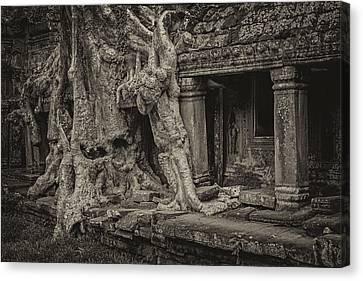 Roots In Ruins 7, Ta Prohm, 2014 Canvas Print by Hitendra SINKAR