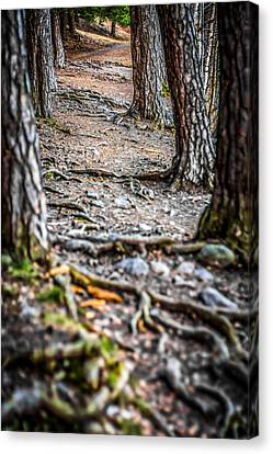 Canvas Print featuring the photograph Rootway by Matti Ollikainen