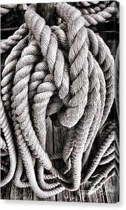 Rope Canvas Print by Olivier Le Queinec