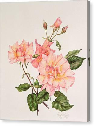 Rosa Compassion Canvas Print by Pamela A Taylor