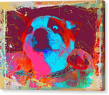 Rosco Belly Up Canvas Print by Erica  Darknell