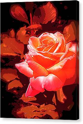 Canvas Print featuring the photograph Rose 1 by Pamela Cooper