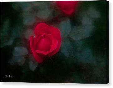 Canvas Print featuring the photograph Rose 1 by Travis Burgess