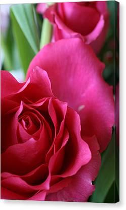 Rose 10 Canvas Print