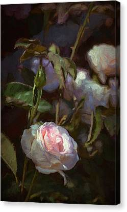 Rose 122 Canvas Print by Pamela Cooper