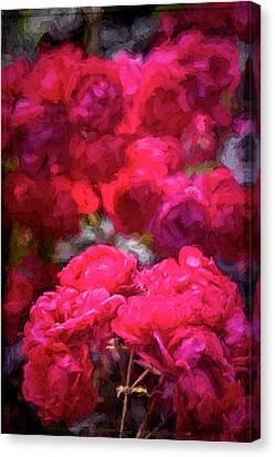 Rose 134 Canvas Print by Pamela Cooper