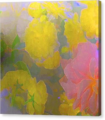 Rose 185 Canvas Print by Pamela Cooper
